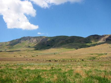 羚羊岛上的草原和牛群